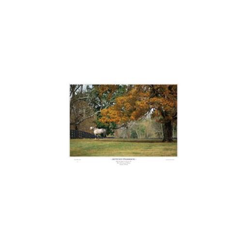 Autumn Paddock